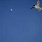 Idiot is trying to catch the Moon......must be something he ate! by Larry Llewellyn