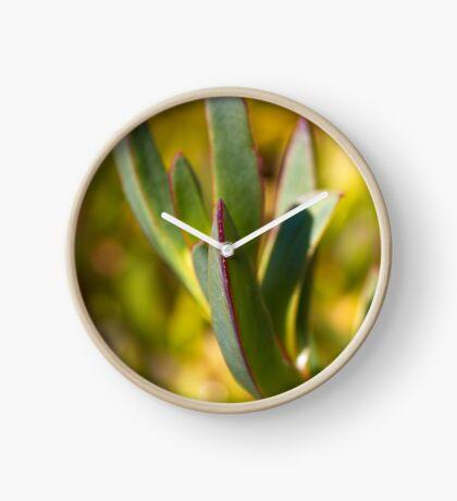 Winters Cactus Clock
