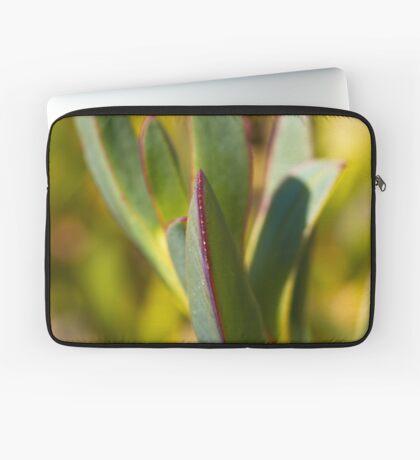 Winters Cactus Laptop Sleeve