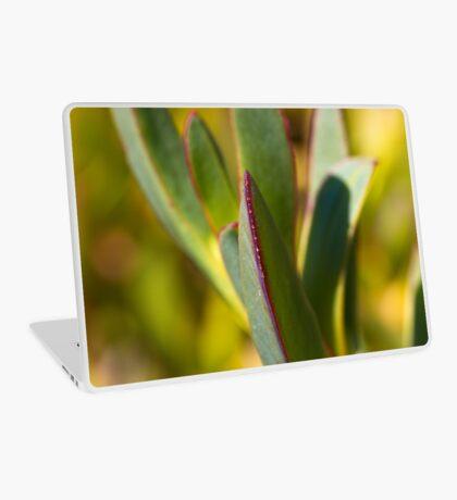 Winters Cactus Laptop Skin