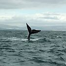 whale tail by shaft77