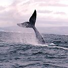 whale tail 2 by shaft77