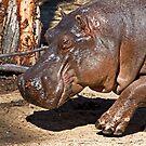 Hippo Walk by miroslava
