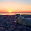 Enjoying the sunset by Trine