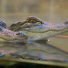 Baby Crocs ! by Bonnie Pelton