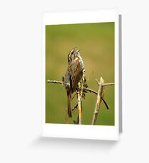 Song Sparrow - Singing Greeting Card