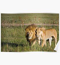 Lions, Masai Mara, Kenya Poster