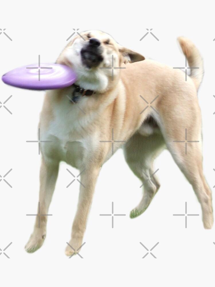 Frisbee-Hund von Elisecv