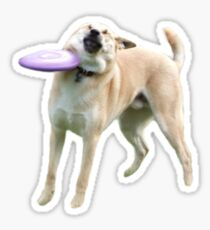 Pegatina Perro del disco volador