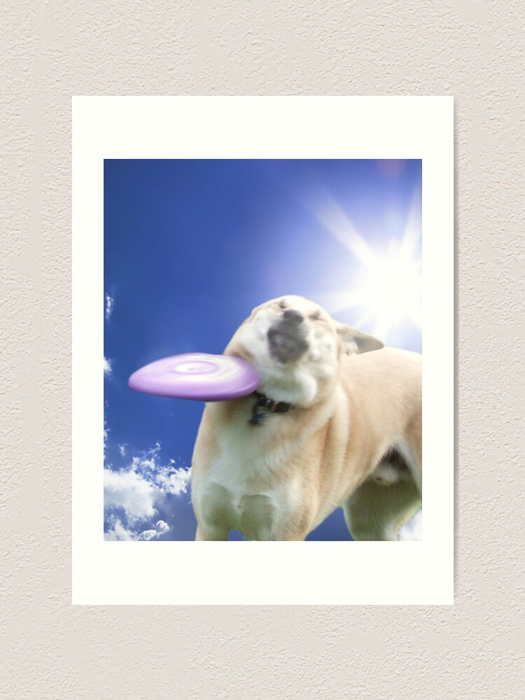 Alternate view of Frisbee Dog, Doggo #4 Art Print