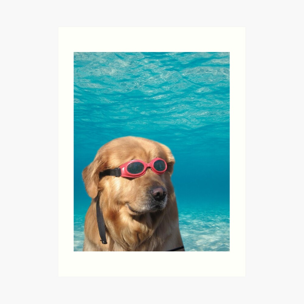 Swimmer Dog Art Print