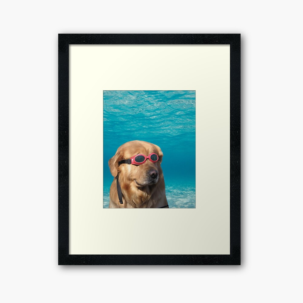 Swimmer Dog Framed Art Print
