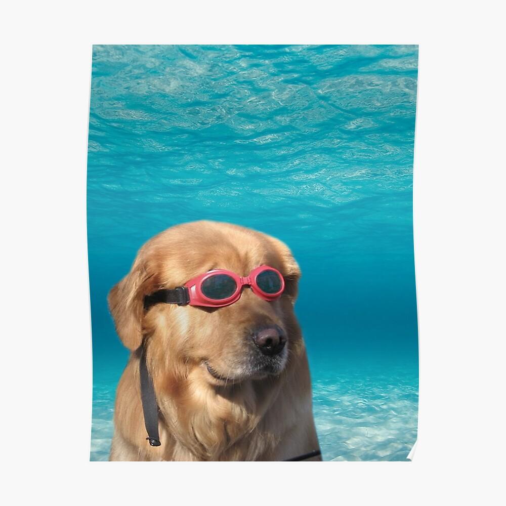 Swimmer Dog Poster