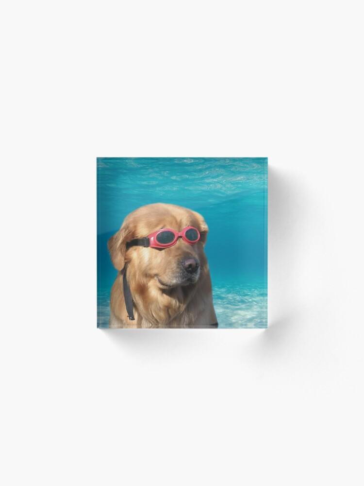 Alternate view of Swimmer Dog Acrylic Block