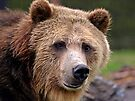 Grizzled Stare by Dawne Olson