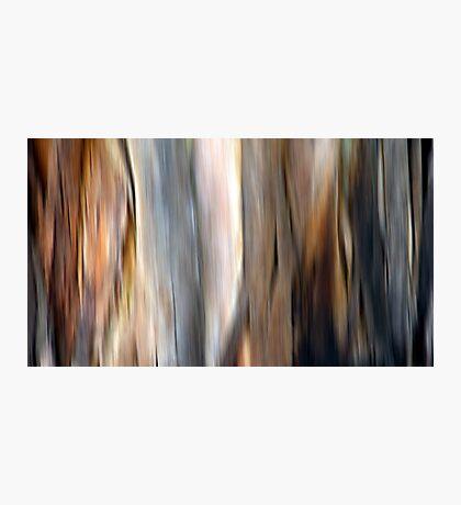 Eucalyptus #4 Photographic Print