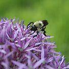 Bee  by alina98