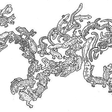 Amphibians - Black and White - Evolution - Frog - Large by EvolutionPoster