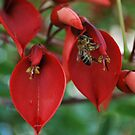 Coral tree and honey bee  by Lozzar Flowers & Art