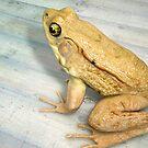 Frog 02 by Ganz