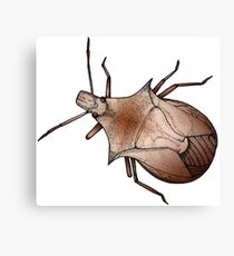Stink Bug, in color Canvas Print