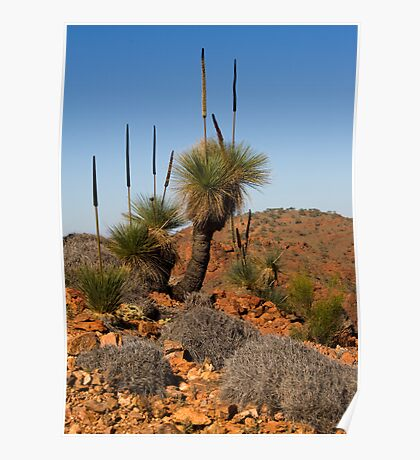 Arkaroola Grass Trees 2 Poster
