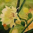 Sunkist Flower by JimmyJack