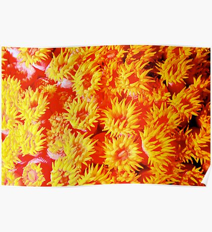 Yellow coral Poster