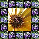 Kap-Gänseblümchen, Lisianthus und Hydrangea-Collage von BlueMoonRose
