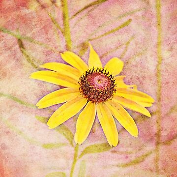 Daisy Jayne by Happyhead64