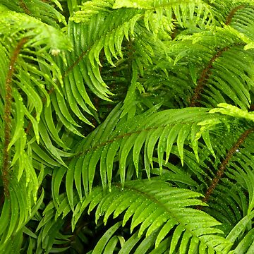 FERNS IN A JUNE RAIN SHOWER by elainebawden