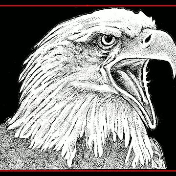Screaming eagle by l73orenson8