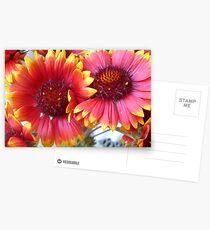 Gaillardia grandiflora Postkarten