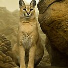 Caracal by Gregory Colvin