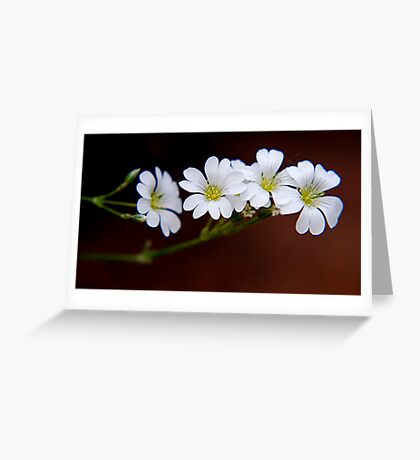 Janis' Flowers Greeting Card