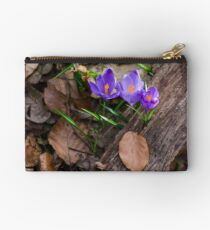 purple crocus flowers among the weathered foliage Studio Pouch
