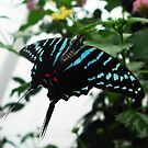 Tourquoise Stripes by Dawn B Davies-McIninch