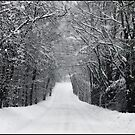 Dump Run on a Snowy Day by Wayne King