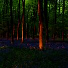Sunset on Bluebells by Kerstin  Inga
