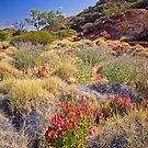 Outback Garden by Richard  Windeyer