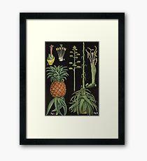 Botanical Pineapple Framed Print