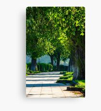 alley with old chestnut trees Canvas Print