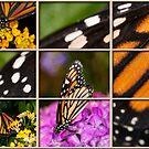 Monarch Montage by Bonnie T.  Barry