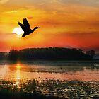 Sonnenuntergang auf dem Mississippi Flyway von Nadya Johnson