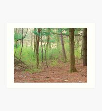 Middle of the Forest Art Print