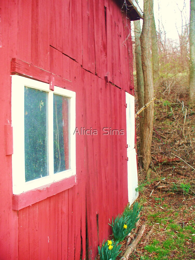 Red Barn by Alicia  Sims