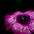 Flowers & Droplets by Tammy Hale