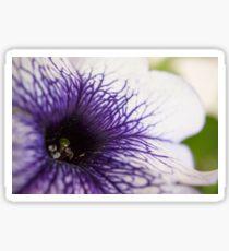 Purple-veined Petunia Sticker