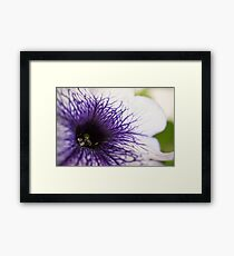 Purple-veined Petunia Framed Print
