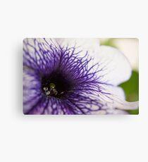 Purple-veined Petunia Canvas Print